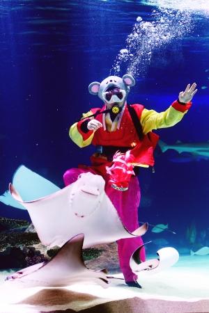 한화 아쿠아플라넷63, '한복입고 수중 피딩쇼'