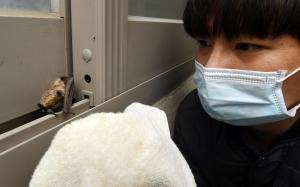 서울시야생동물센터 기획취재