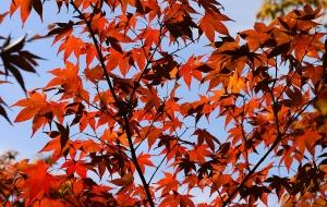 성큼 다가온 가을