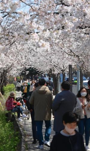 여의도 벚꽃길 산책하는 시민들