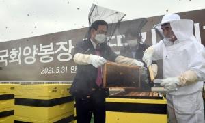 주호영 김민석 국회꿀 채밀